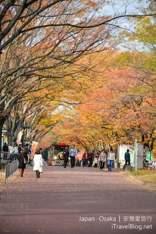 大阪赏枫 万博纪念公园 19