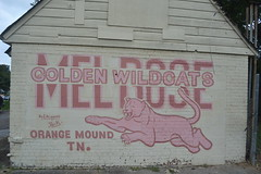 588 Melrose Golden Wildcats