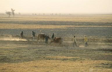 Plowing fields, Mali. Photo: © Curt Carnemark/World Bank