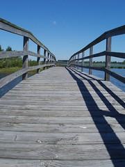 Bridge on Assateague Island