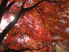 Autumn comes to Nahan-San-Seon