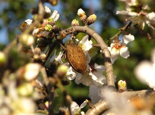Last year's almond