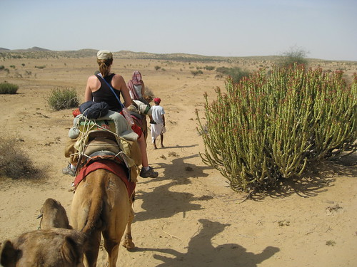camels continue
