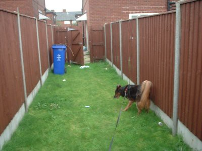 the long narrow bit, leading from the gate to the garden.. you can see Jess is already exploring!