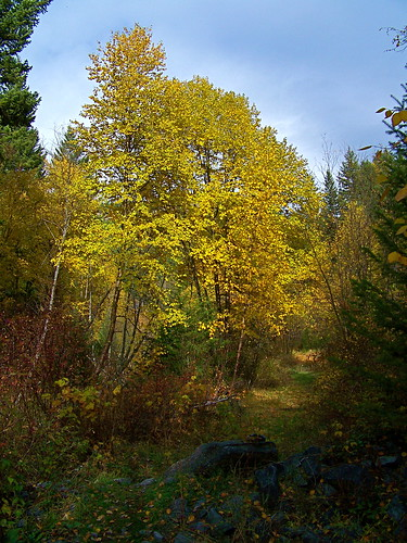 Aspen & Cottonwood