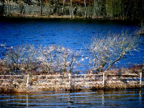 Flooded Loch