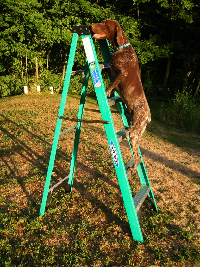 Bailey climbing a ladder
