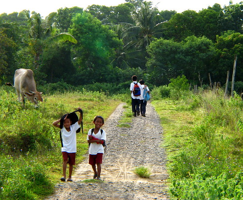 school boys commuting rural area uniform  Pinoy Filipino Pilipino Buhay  people pictures photos life Philippinen  菲律宾  菲律賓  필리핀(공화�) Philippines  cow