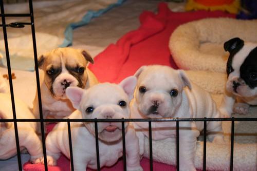 Helps! We iz puppies in jail!