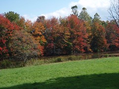 Amherst foliage