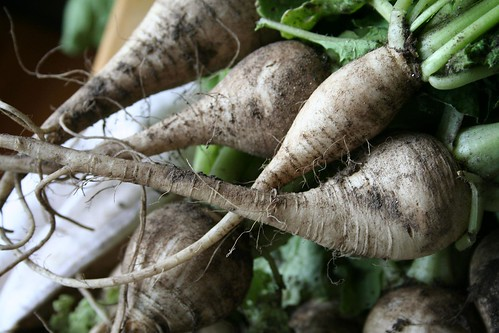 Turnip from the garden