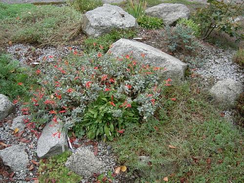Street rock garden III