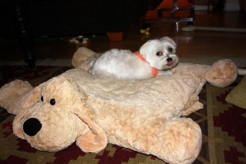 dog on a dog skin rug