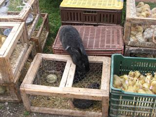 DSCF6026 dierenmarkt
