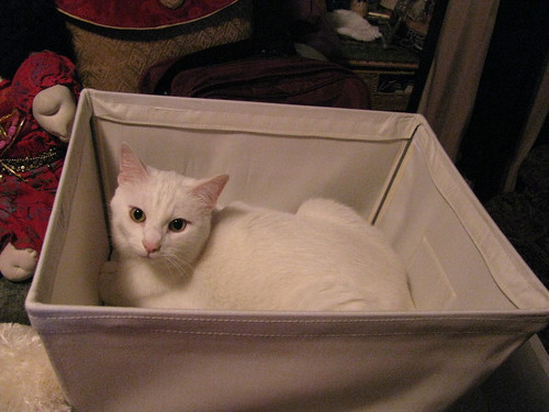Obligatory Cat in a Box
