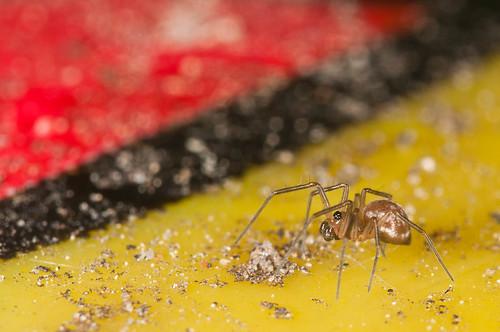Een klein spinnetche