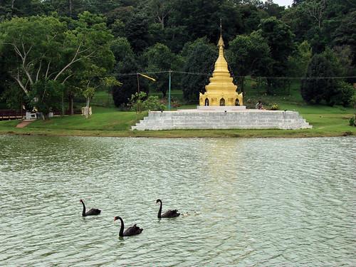 Jardín botánico de Kandawgyi.