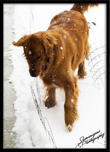 snowBruce3