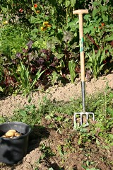 Harvesting potatos - Gardening Tools
