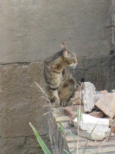 En trebenet kat fra Torre Argentina i Rom