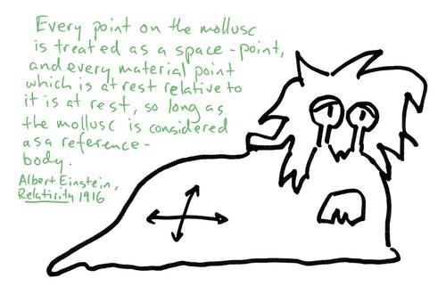 Einsteinmollusk