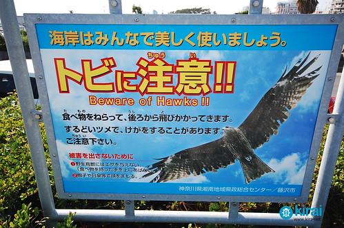Kites in Enoshima