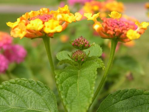 Simetr�a floral
