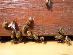 Les abeilles à l'Hôtel Eiffel Park