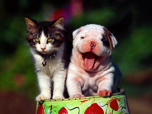 Smart cat and lovely dog