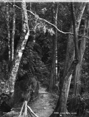 Linda Path, Leura