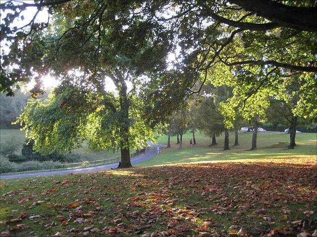 Phoenix Park in autumn