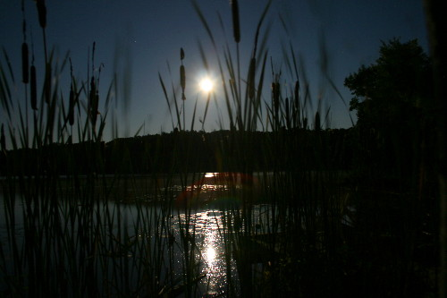 Moonrise through the cattails