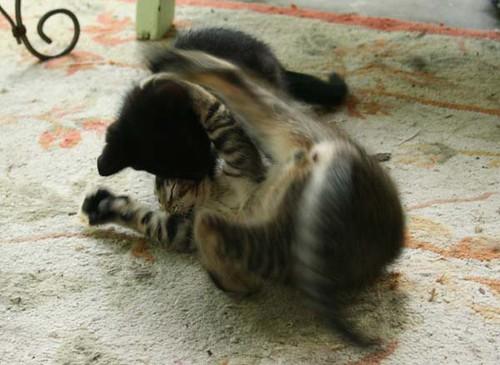 Fun with kittens