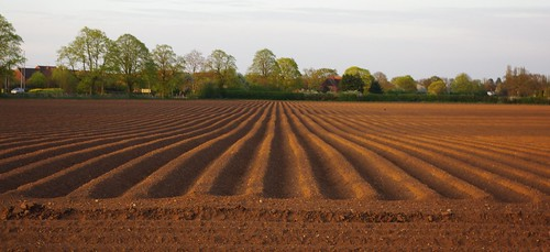 20100427-01_Potato ridge and furrow - parallel line perspective by gary.hadden