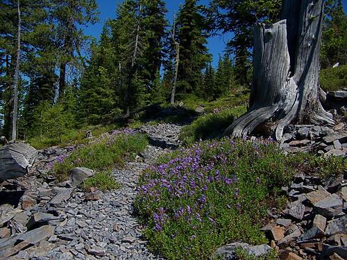 Baldy Mountain trail, T340