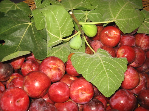 pluots and fig branch