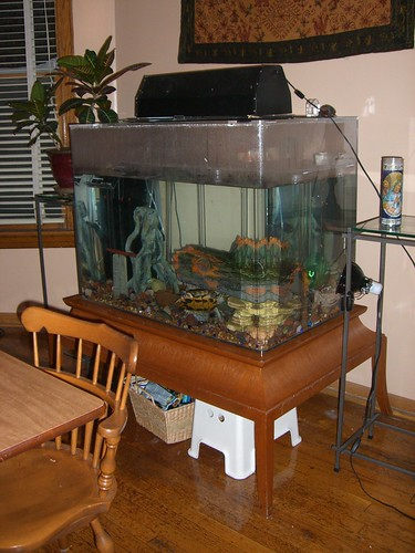turtle aquarium tank setup picture