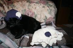 2008-11-28-hats-cat