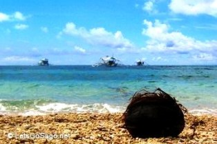 Malapascua Coconut Husk