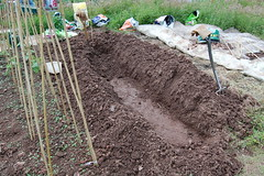 080628-allotment001