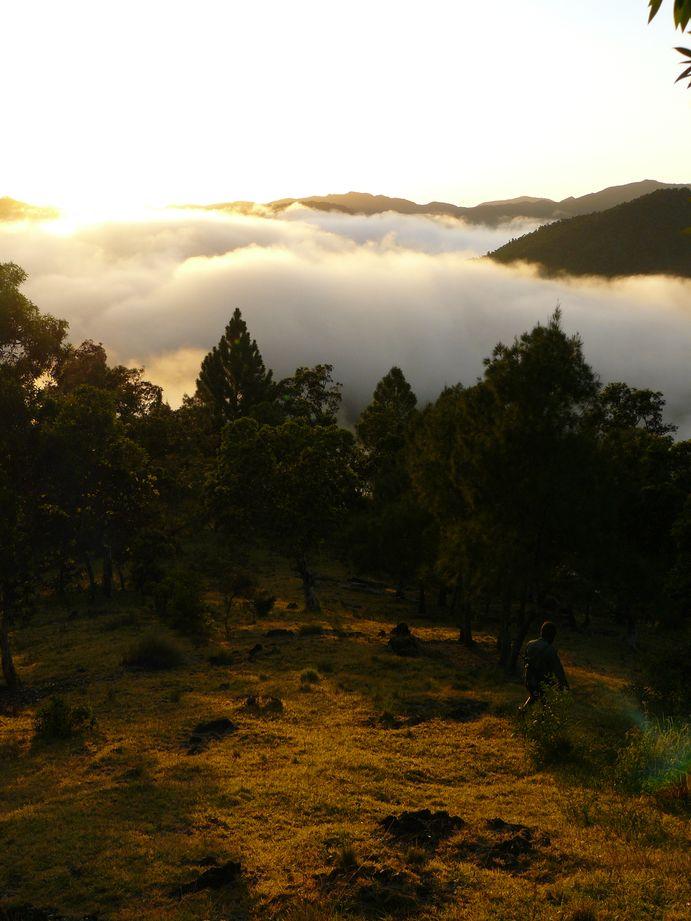 Petit matin dans la chaine caledonienne #12