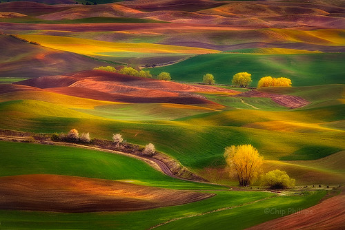 Sunset Glow Palouse