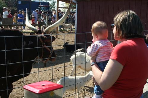 Emily meets a big bull!