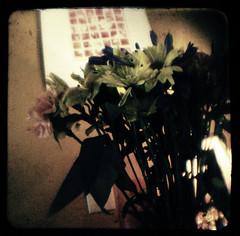 daisies copy