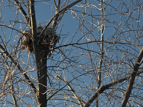 N is for Nest, Tucked in a Bough