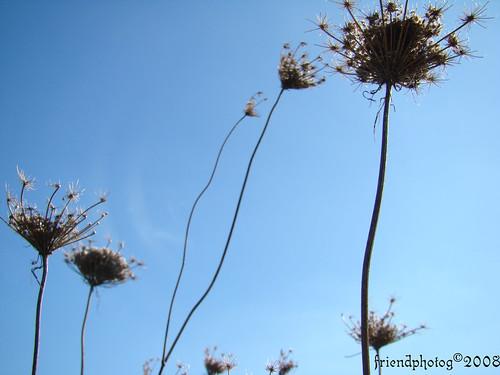 Weeds 5 - sig