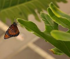 04.05.08 Smithsonian -- Butterfly Pavilion (11)