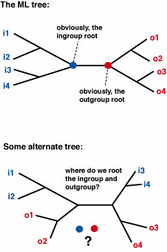 Phylogenetic Dilemma