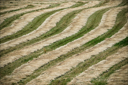 Hay pattern on farm