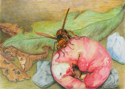 智勝_黃蜂與螞蟻